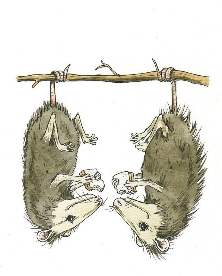 15 best Possum Love images on Pinterest | Opossum, Animal ...