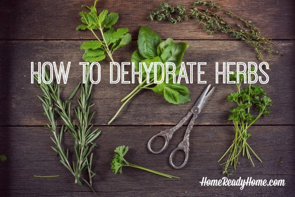 How to Dehydrate Herbs is this weeks feature on Front Porch Friday | PreparednessMama