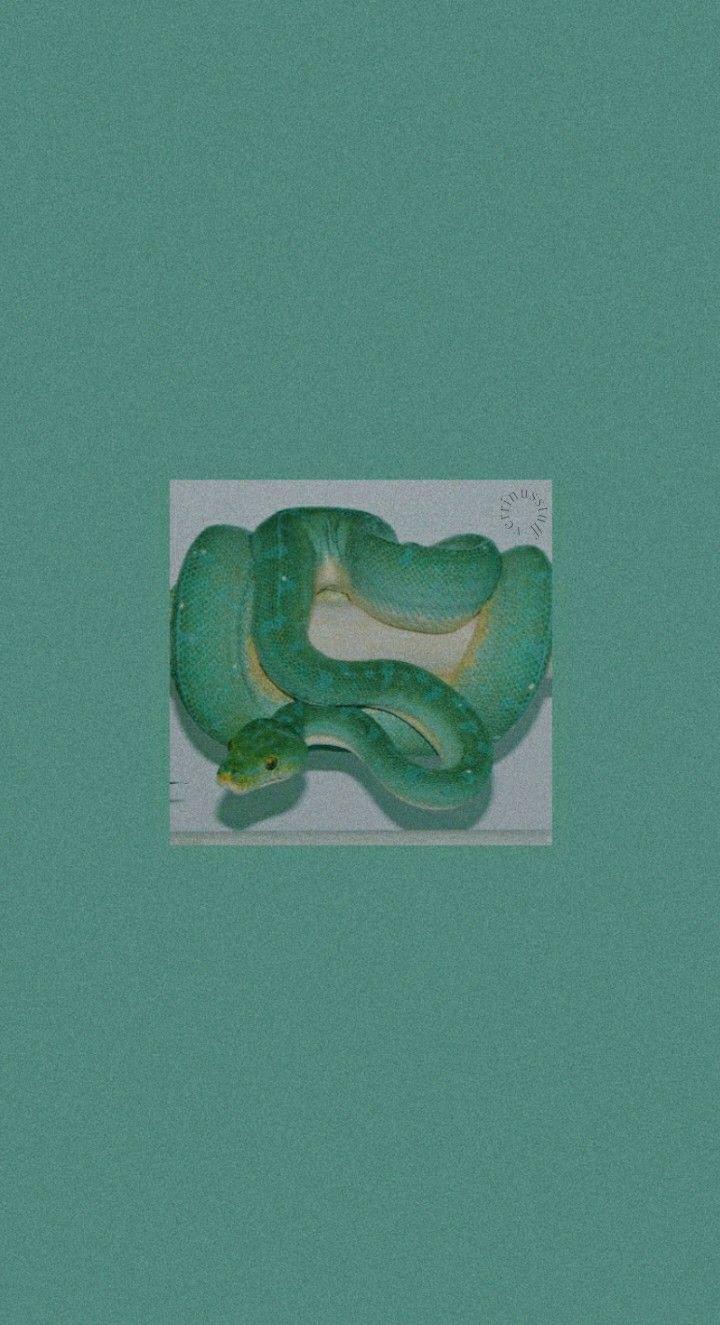 Lockscreen Green Snake НšŸðšŽðš›ðš›ðš'𝚗𝚞𝚜 In 2020 Snake Wallpaper Slytherin Wallpaper Green Wallpaper