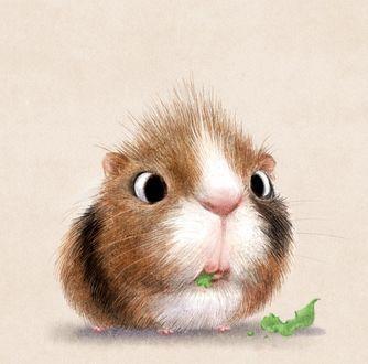 Морская свинка ест листья, иллюстрация Sydney Hanson