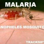 Malaria: Causes, Symptoms, Diagnosis, Prevention