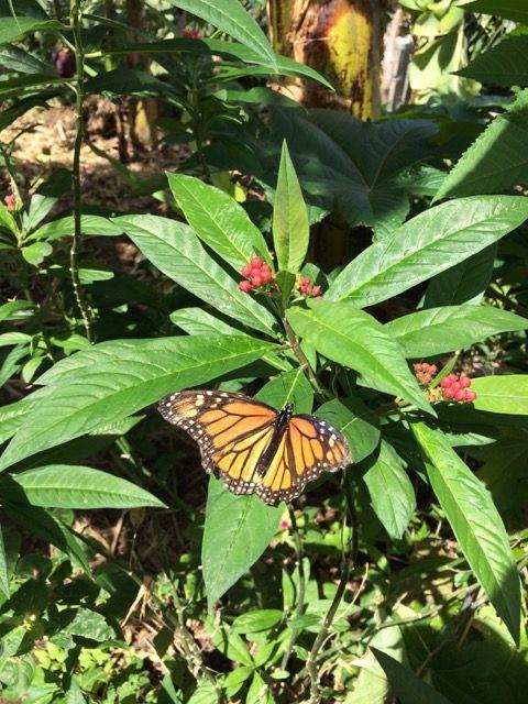 Un oasis para las mariposas <3   An oasis for butterflies <3  - Imagen de Stéphanie
