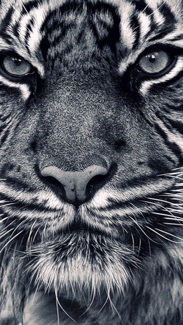Iphone Wallpaper Animals 426 Peinture Tigre Tourisme Animaux