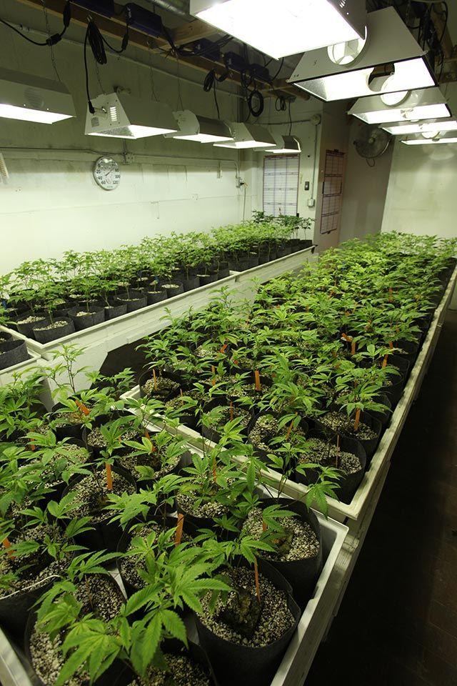 78 best images about grow room design on pinterest weed indoor and medical marijuana. Black Bedroom Furniture Sets. Home Design Ideas