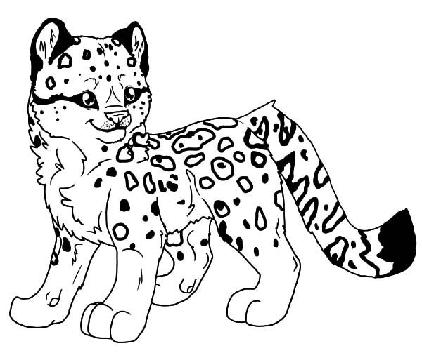 Baby Snow Leopard Coloring Pages Batch Coloring Baby Snow