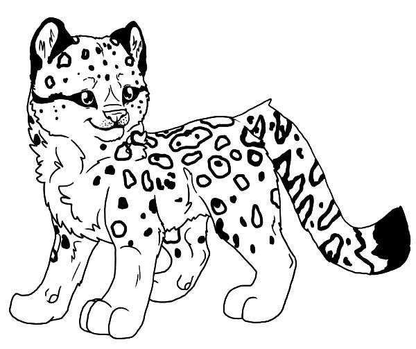 Image Result For Amur Leopard Color Sheet Leopard Art Animal