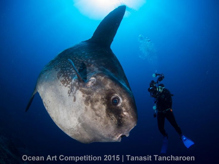 5th Place Mirrorless Wide-Angle Ocean Art 2015 Tanasit Tancharoen|Underwater Photography Guide