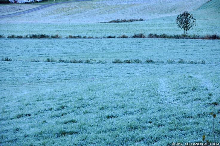 #frost #field #green #cold #Norway #Autumn #SousaNeshaug (C) 2017 Sousa & Neshaug Photography - http://sousaneshaug.com