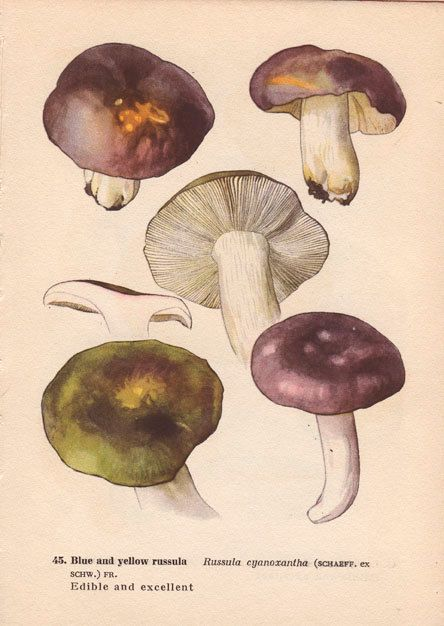 Vintage Botanical Mushroom Diagram Print, Wall Art Illustration ...