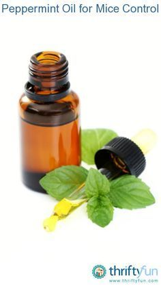 This is a guide about using peppermint oil for mice control. There are a number