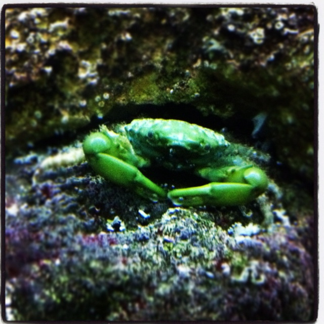 12 best my saltwater fish tank images on pinterest for Starting a saltwater fish tank