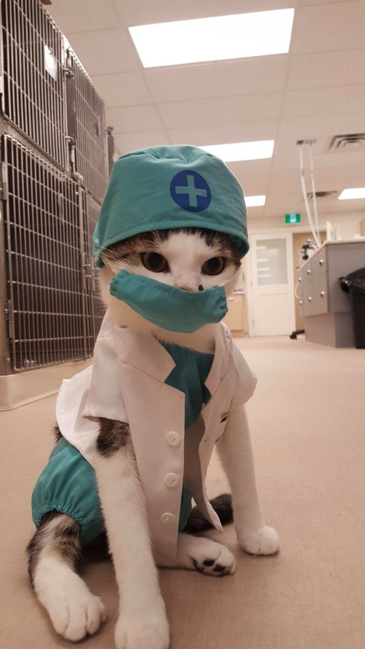 Nurse Floofypants is our most requested OR nurse.