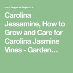 Carolina Jessamine, How to Grow and Care for Carolina Jasmine Vines - Garden…