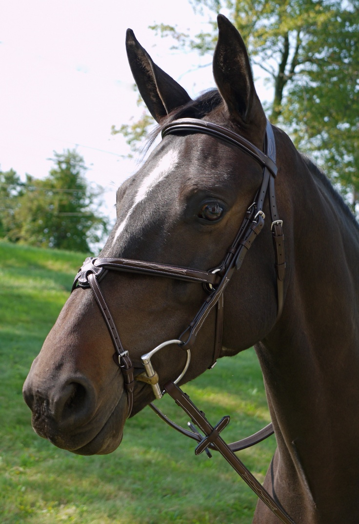 17 Best Images About Five Star Tack Bridles On Pinterest