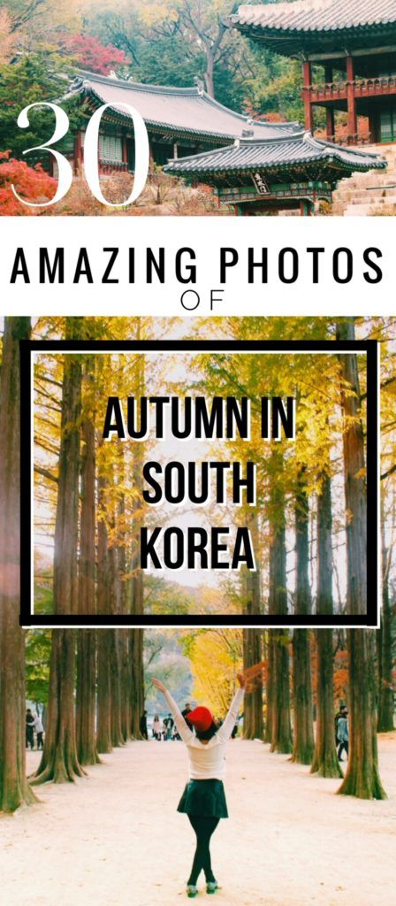 30 Amazing Travel Photos of Autumn in South Korea--With sugary cinnamon stuffed pancakes, harvest bounty, toasty drinks, cheeky mountains and near-neon autumnal hues, the South Korea autumn just won at life.