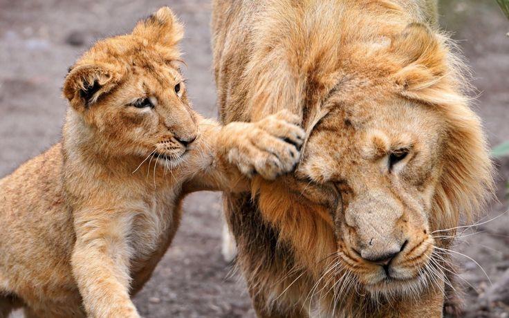 Lion Sanctuaries in India  @ sanctuariesindia.com