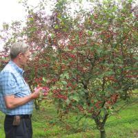 Dwarf Fruit Trees from Stark Bro's - Dwarf Fruit Trees For Sale