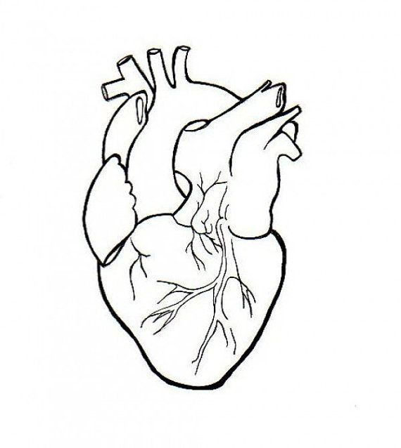 Human Heart Embroidery Anatomical Line Art Simple