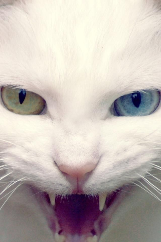 My cat is all white just like this with the exact same eyes!