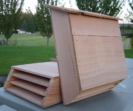 Do It Yourself Home Design: Bat Houses 1 Bat Eats 500-1000 Insects A Hr