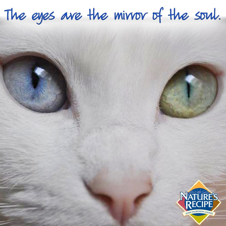 """The eyes are the mirror of the soul."" #cat #quote"