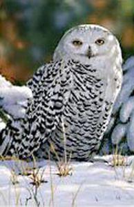 Snow Owl Garden Flag
