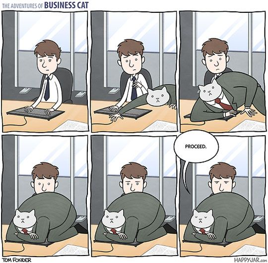 Business Cat Adventures