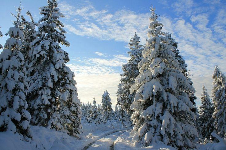 Winterwanderung zur Hanskühnenburg