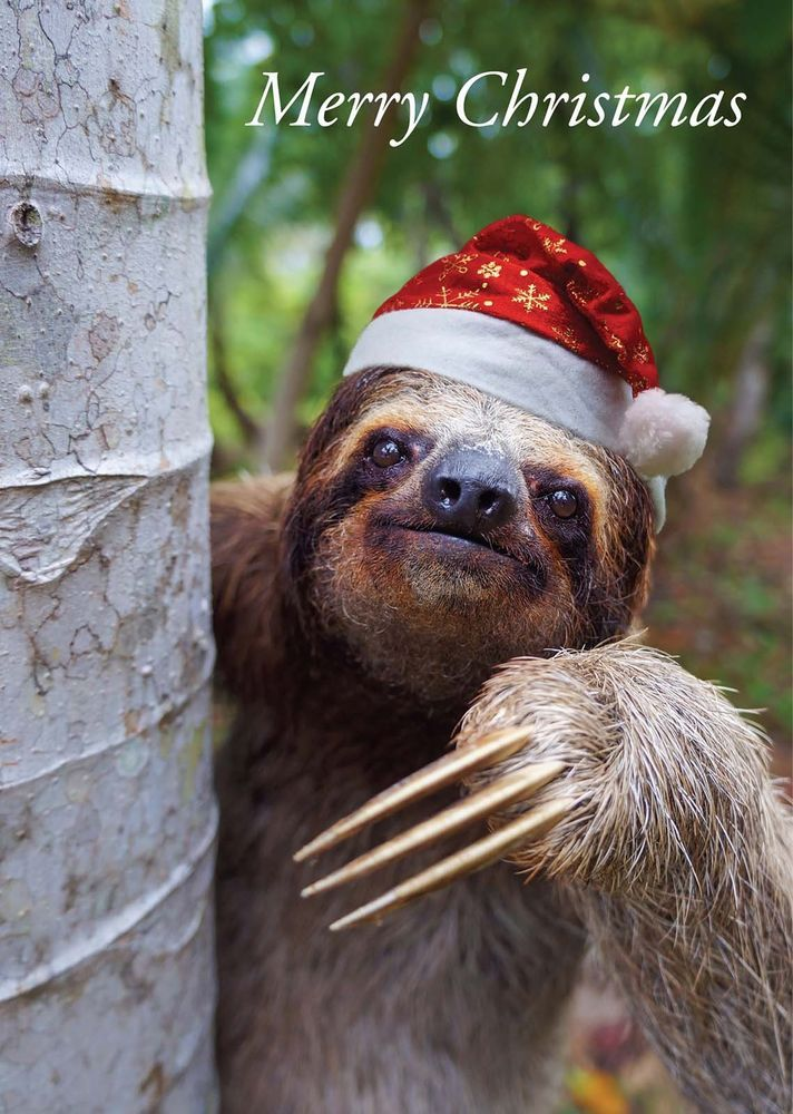 Santa Sloth Christmas Card - Unique Designs from Red Frog Designs & FREEPOST