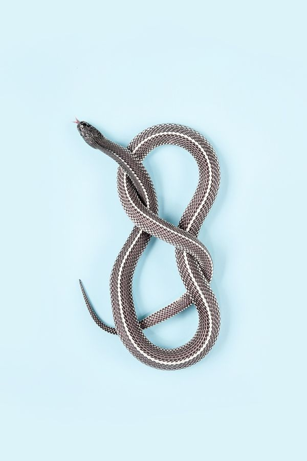 Slitherstition by Andrew McGibbon   Creative Boom Magazine