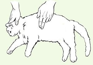 How to Save a Choking Cat