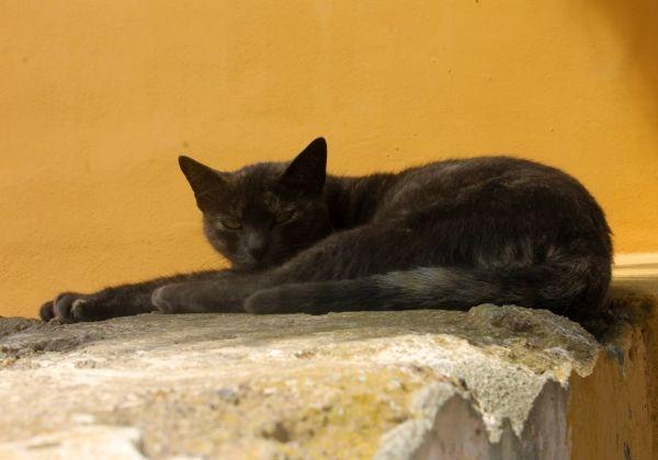 Cat in Greece - www.robertozedda.it