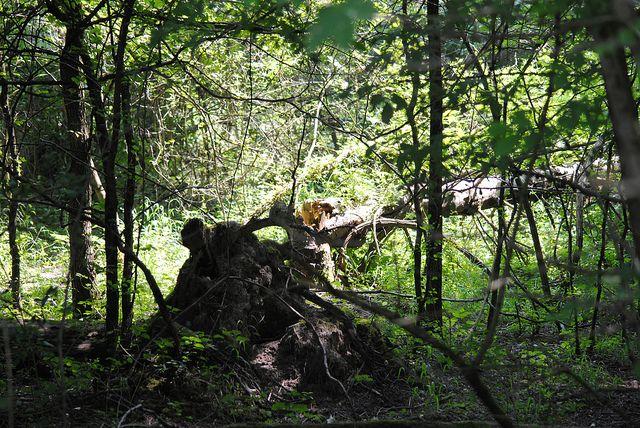 MSC UNIPD lezione a cielo aperto all'oasi naturalistica. Gli alberi abbattuti, morti o caduti non si toccano: sono fonte di biodiversità. Vincheto di Celarda con #mcs luglio 2013