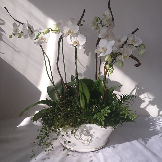 Custom living plant and orchid arrangement.  Also container from Barton's. #arrangementsbyamanda