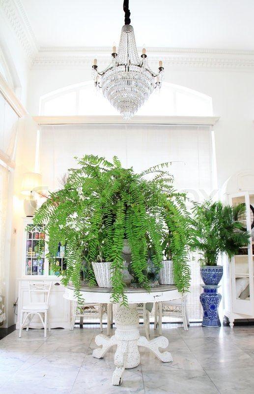 Stock foto af 'Luksus interiør i stue med grønne planter'