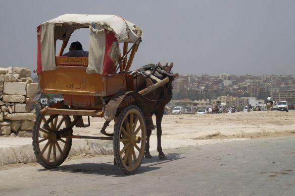 Horse and cart - Giza Plateau