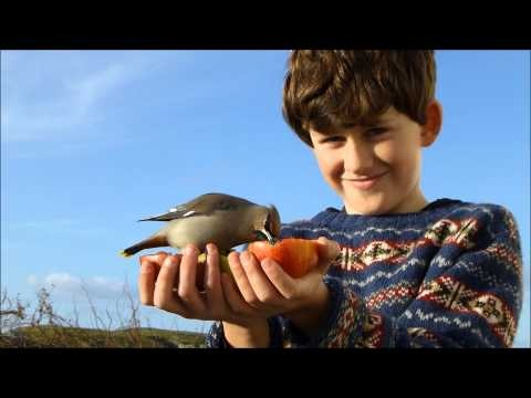72 best Fair Isle, Shetland Islands, Scotland , UK. images on ...
