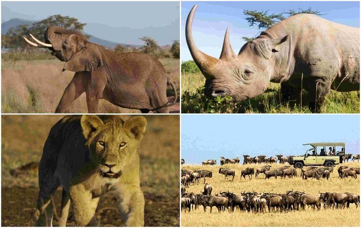 How #AfricanSafaris Offer The Way To Live Your Dream #Safari Experience in #Namibia? Visit @ http://www.enricostours.com/