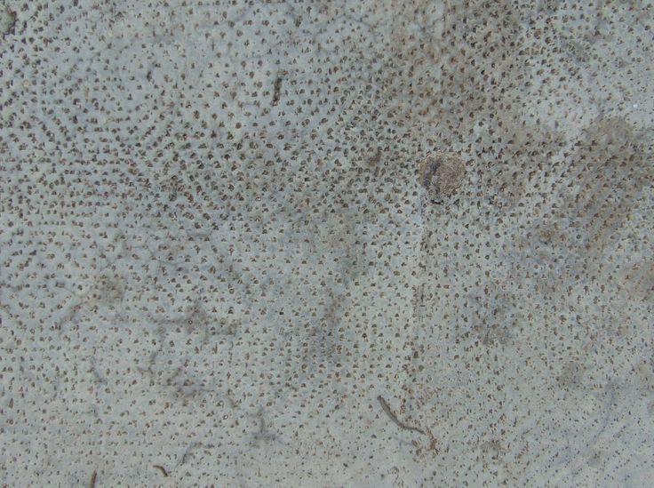 concrete-texture0012