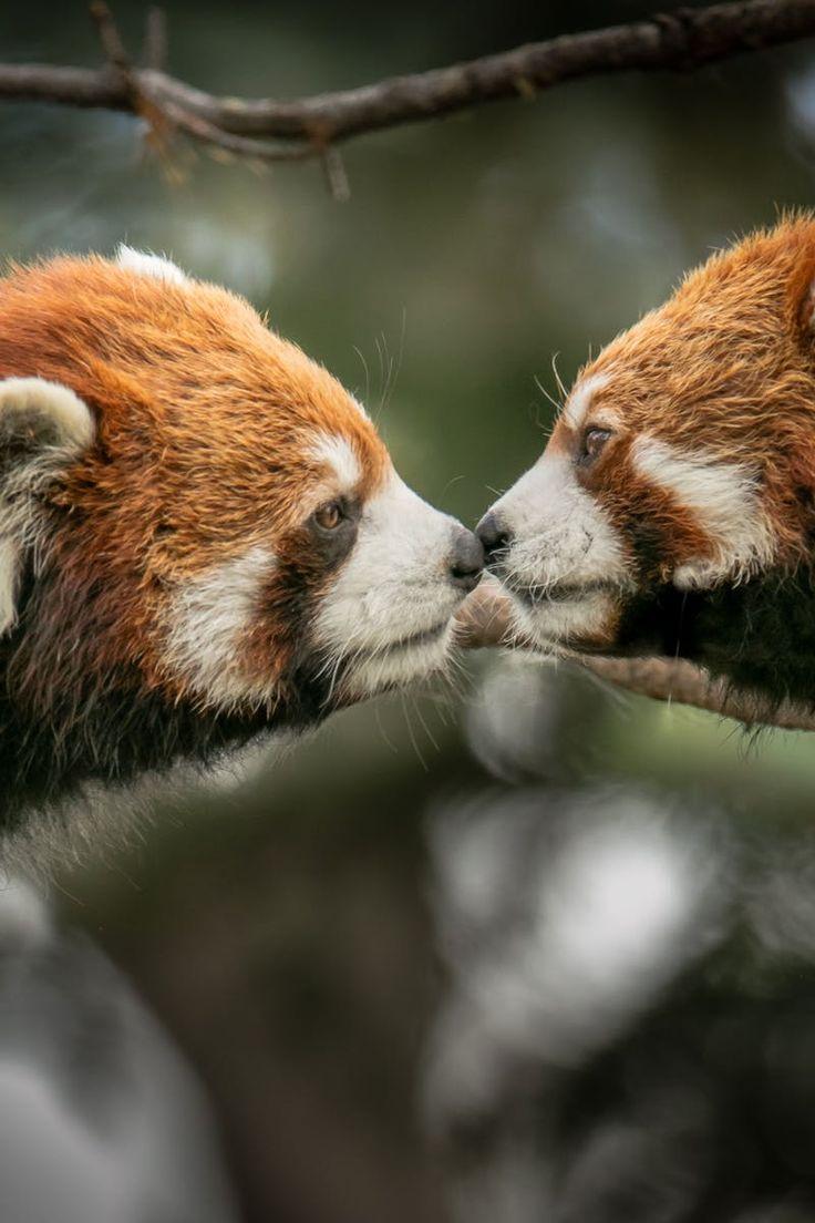 New free photo by Bill Settle. More work by Bill on Pexels at https://www.pexels.com/u/bill-settle-290883/ #wood #love #animal