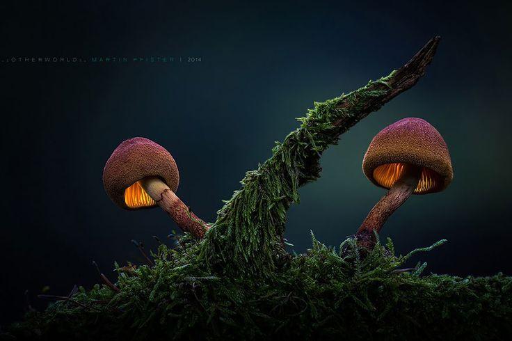 Sous l'objectif de Martin Pfister, ces champignons semblent tout droit sortis du monde des fées.