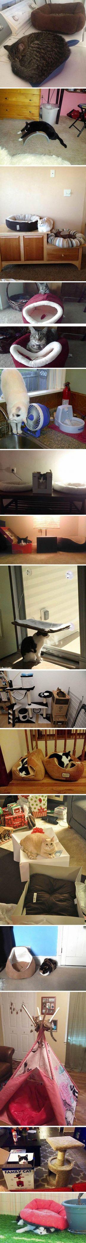 Cats und wie sie es für sich lieber haben...