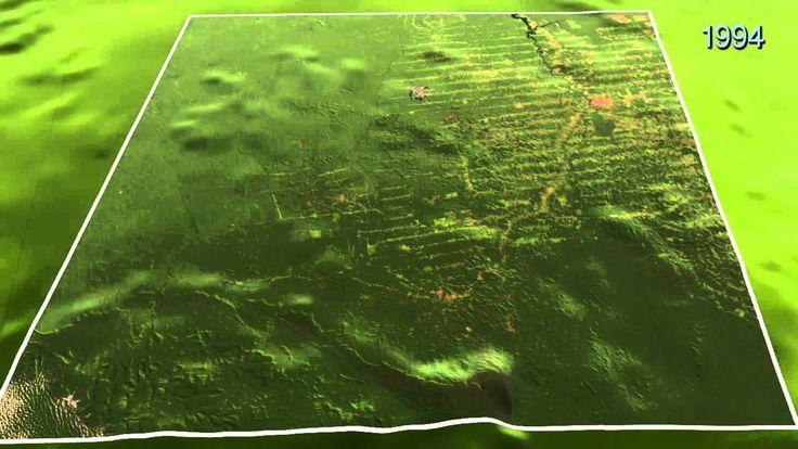 Odlesňovanie v Brazílii.