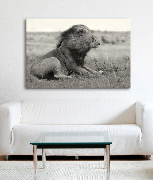 African Wind Lion Modern Canvas Art Print