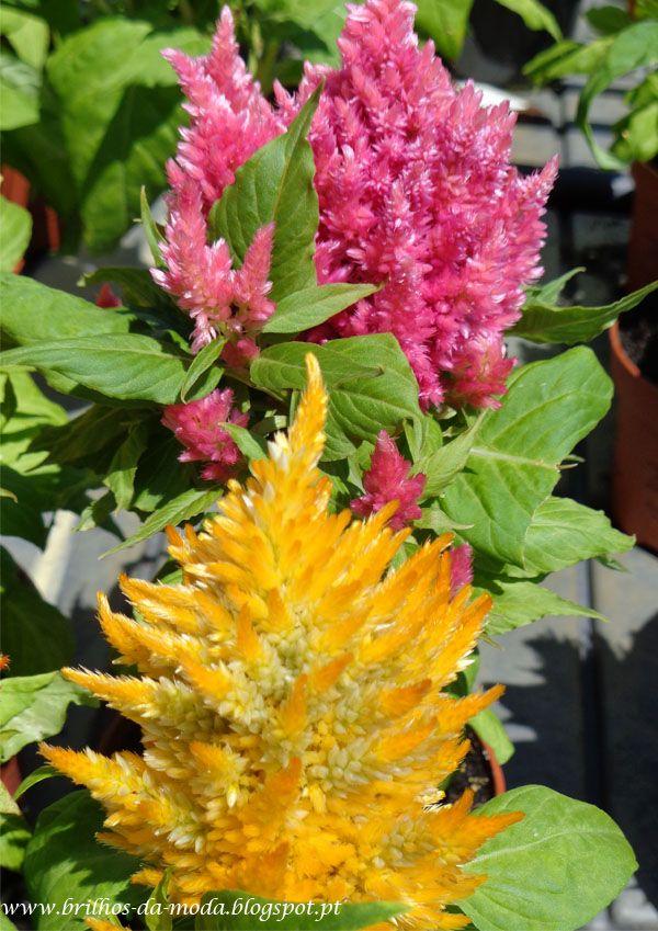 Brilhos da Moda: Flores, uma maravilha da natureza #50