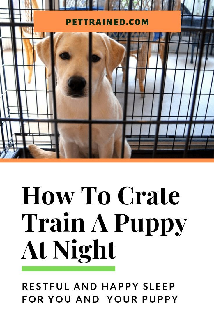 New Puppies Are Full Of Energy Crate Training Your Puppy At Night