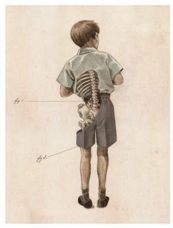 weird anatomy poster
