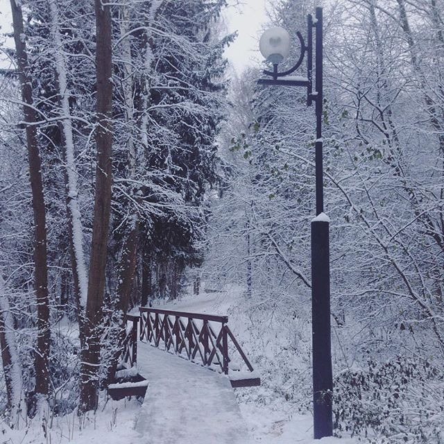 【yuliya_balu】さんのInstagramをピンしています。 《Очень здорово пройтись по заснеженному лесу ❄️ Нельзя упускать такую возможность . #снегопад #лес #зима #природа #парк #winter #russia #forest #trees #nature #walking #fairytale #narnia #snow #snowfall #snowflakes #road #bridge #happytime #park #beautiful #冬 #森 #雪 #ロシア》