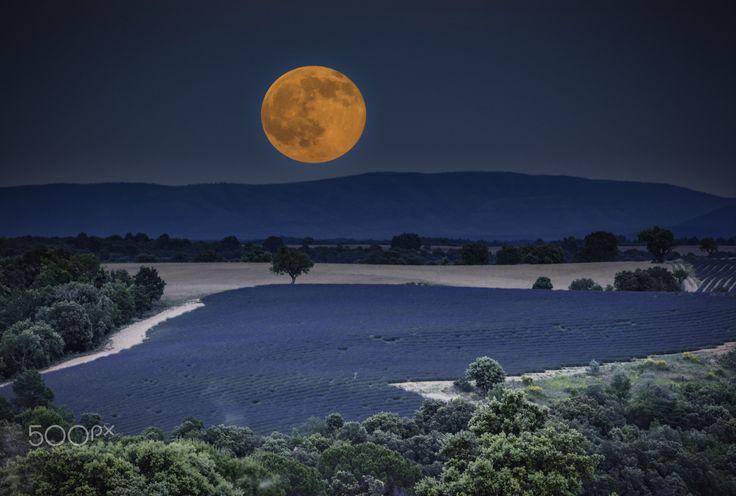 Summer Solstice Moon Valensole