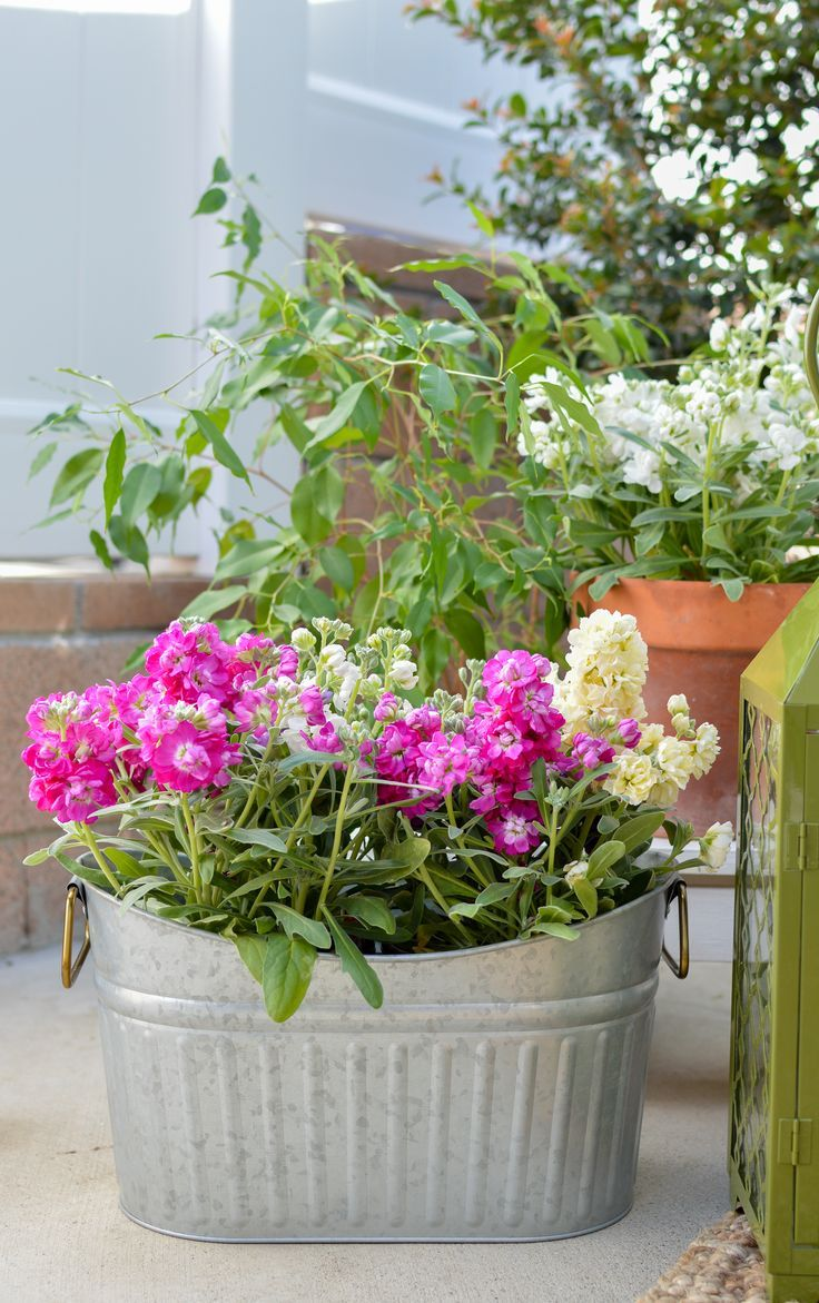 bec814279ef1744c0214cd9e452568b2 - Better Homes And Gardens Potted Plants Ideas